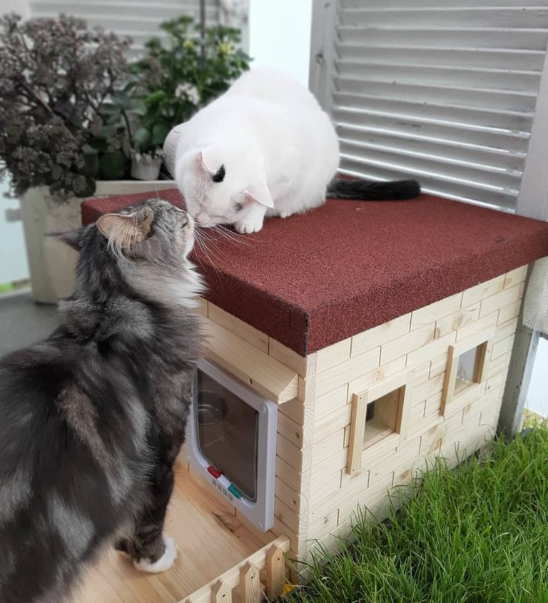 Katzenhaus Lilly Kundenfoto